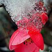 Ice Flower Art Print