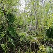 Jean Lafitte National Preserve Swamp Louisiana Art Print