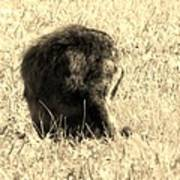 Jean Lafitte's Headless Graveyard Cat Art Print