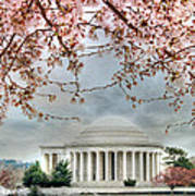 Jefferson Blossoms Art Print