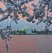 Jefferson Memorial Cherry Blossoms Art Print