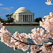 Jefferson Memorial Cherry Trees Art Print
