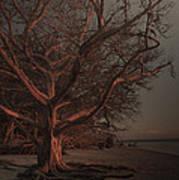 Jekyll Island Sunset Art Print