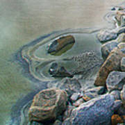 Jekyll Island Tidal Pool Art Print