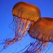 Jelly Fish In Harmony Art Print