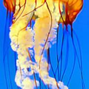 Jellyfish 5 Art Print