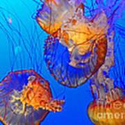 Jellyfish IIi Art Print