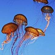Jellyfish Swarm Art Print