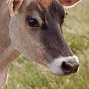 Jersey Cow Portrait Art Print