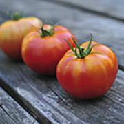 Jersey Tomatoes  Art Print