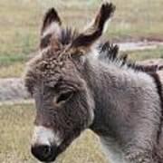 Jerusalem Donkey Art Print