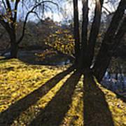 Jewel In The Trees Print by Debra and Dave Vanderlaan