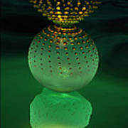 Jeweled Astrophytum  Art Print