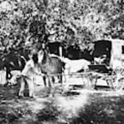 Johnston Horse Wagon Art Print