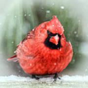 Jolly Old ....... Cardinal  Art Print