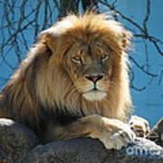 Joshua The Lion On His Rock Art Print