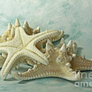 Journey To The Sea Starfish Art Print