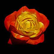 Judy Garland Rose Art Print