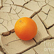 Juicy Orange And Drought. Art Print by Alexandr  Malyshev
