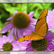 Julia Butterfly 2 Art Print