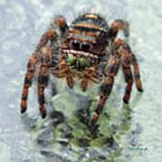 Jumper Spider 4 Art Print