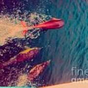 Jumping Dolphins Art Print