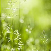 June Green Grass  Art Print by Elena Elisseeva