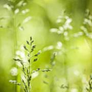 June Green Grass Flowering Art Print