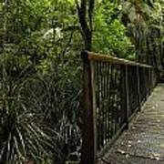 Jungle Bridge Art Print