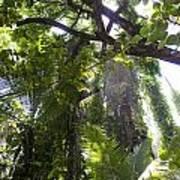 Jungle Canopy Art Print