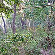 Jungle Forest In Chitwan Np-nepal Art Print