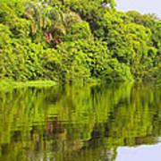 Jungle River Art Print