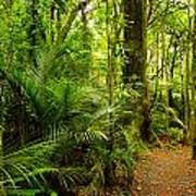Jungle Scene Art Print