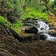 Jungle Stream Kauai Art Print