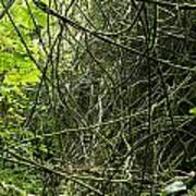 Jungle Vines Art Print