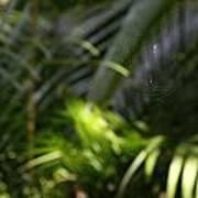 Jungle Web Art Print