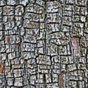 Juniper Bark- Texture Collection Art Print