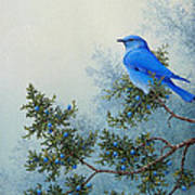 Juniper Berries Art Print