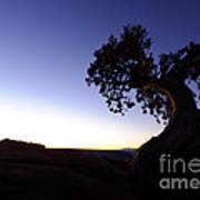 Juniper Tree At Dawn Art Print