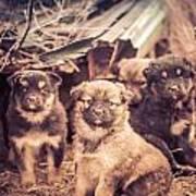 Junkyard Dogs Art Print