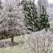 Ice Coating Trees And Lawn In A Back Yard Art Print