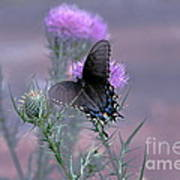 Just Fluttering By Art Print