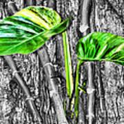 Just Green 2 By Diana Sainz Art Print