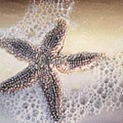 Just One Starfish Art Print