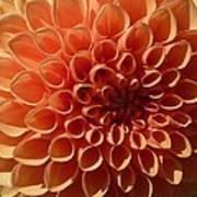 Just Peachy Dahlia Art Print