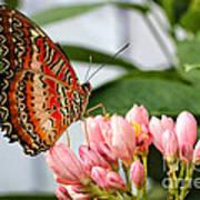 Just Pink Butterfly Art Print