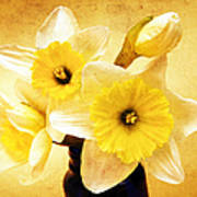 Just Plain Daffy 1 - Flora - Spring - Daffodil - Narcissus - Jonquil Art Print