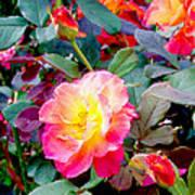 Kaleidoscope Of Roses Art Print