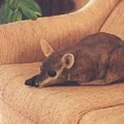 Kangaroo Buddy Sculpture Art Print