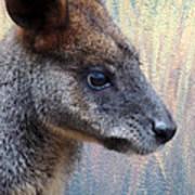 Kangaroo Potrait Art Print